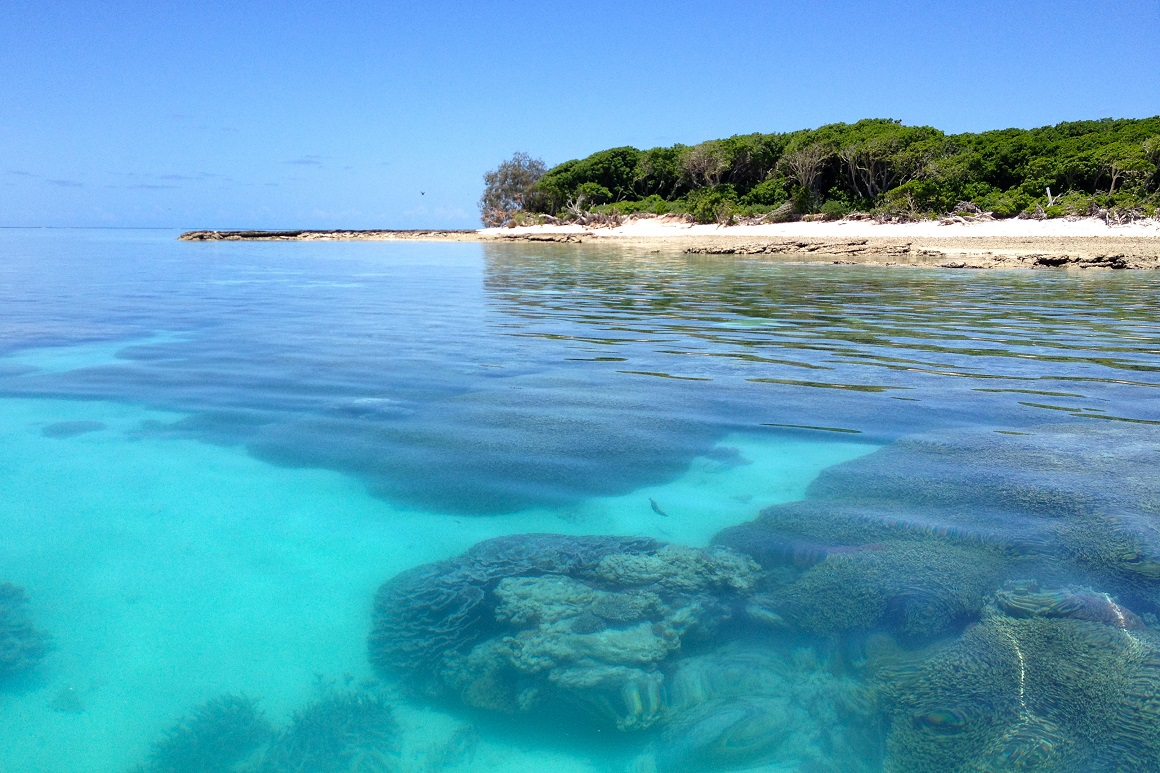 Underwater, corals sit on a sandy lagoon floor while above water a forested coral cay is fringed by a white sandy beach.