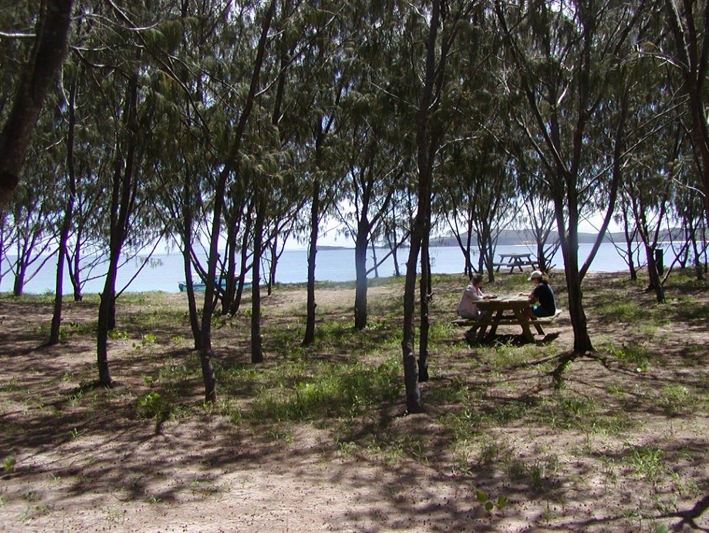 Casuarinas shading a picnic table frame a scenic view of blue ocean waters with a forested headland in the distance.