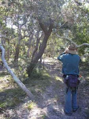 Be well prepared when walking on Curtis Island. Photo: D. Sansom, Queensland Government