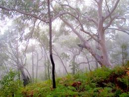 Photo of mist through open eucalypt woodland.
