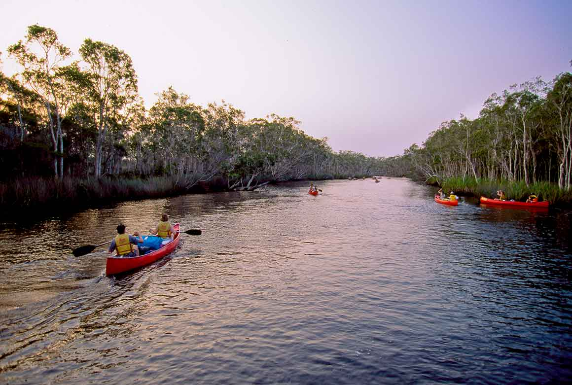 People in yellow life jackets paddle several bright red canoes up the paperbark-fringed river, bathed in the soft light of sunset