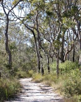Scribbly gum woodland on the Aemula trail. Photo: Ross Naumann.