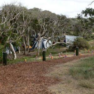 Pandanus camping area, Nine Mile Beach.