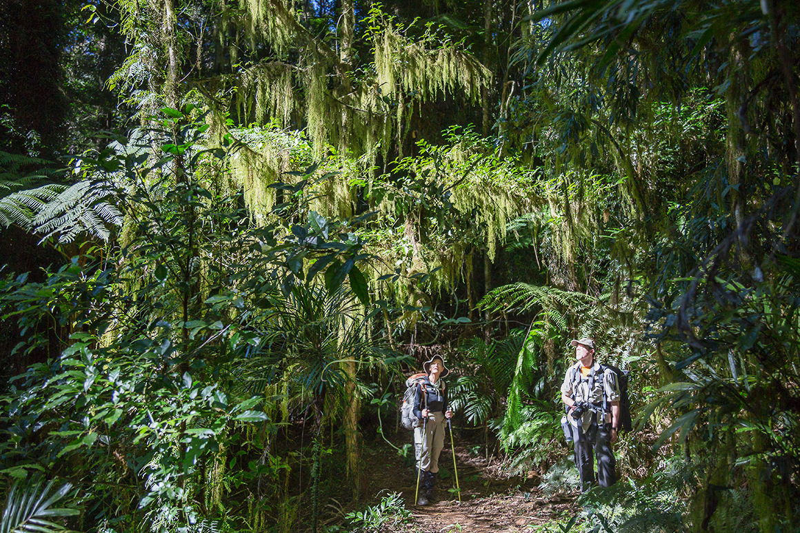 Two hikers stand on a track surrounded by lush green rainforest and hanging foliage of epiphytes on Antarctic beech trees.