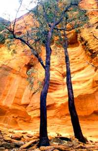 The Precipice Sandstone of Castle Mountain. This colourful stone is a key feature of the park's landscape and is also found to the west in parks such as Carnarvon Gorge. Photo: Robert Ashdown, Queensland Government.