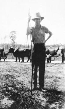Lean and strong. George Clarence Byrnes stands, bullock whip in hand, in front of his bullock team, 1931. Photo courtesy of Ray Byrnes.
