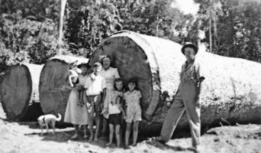 Byrnes family and friends stand at the top of one of the logs. The bevelled edge helped stop the log from digging in when it was being snigged (lifted and dragged). Photo courtesy of Ray Byrnes.