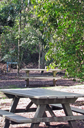 The small picnic area is regularly visited by brush turkeys. Photo: Karen Smith © Queensland Government