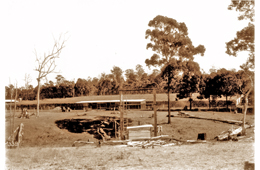 Benarkin nursery 1934. Photo courtesy of the historical Queensland Forest Service photograph collection