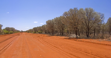Roads to and within Currawinya are long and dusty; drive safely and keep watch for wildlife. Photo: Robert Ashdown © Queensland Government