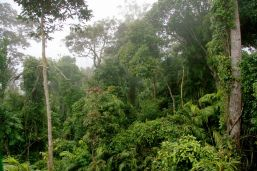 Dense rainforest of Jumrum Creek