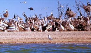 Lake Wyara is closed to boating to protect nesting birdlife. Photo: Karen Smith © Queensland Government