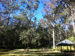 Have a picnic or barbecue at Cedar Creek or one of the many other day-use areas. Photo: Mark Patenaude, Queensland Government.