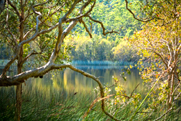 Photo of orange and green foliage in the trees reaching out over the water.