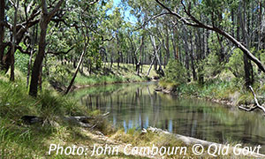Dogwood Creek , Barakula State Forest. Photo: John Cambourn © Queensland Government.