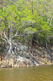 Emu Creek. Photo: R. Ashdown, Qld Govt.