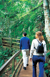 The cool mountain rainforest is an inviting place to walk. Photo: Tourism Queensland