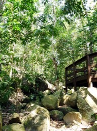 Image of the viewing platform overlooks a seasonal creek on the Secret Garden track.