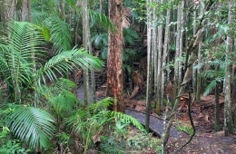 Image of the rainforest at the beginning of the Wompoo circuit.