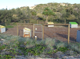 All QPWS waste transfer stations are fenced for visitor safety and to deter dingoes from scavenging. Photo: Queensland Government