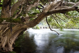 Mulgrave River. Photo: Rob Ashdown, Queensland Government