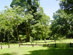 The camping area provides shaded camp sites. Photo: Queensland Government.