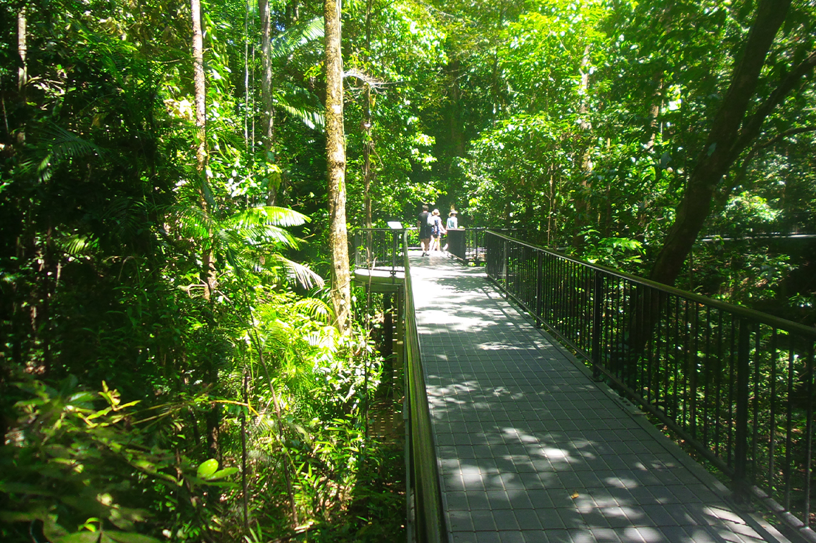 Lush green rainforest surrounds an elevated walkway leading into the forest with a family in the distance.