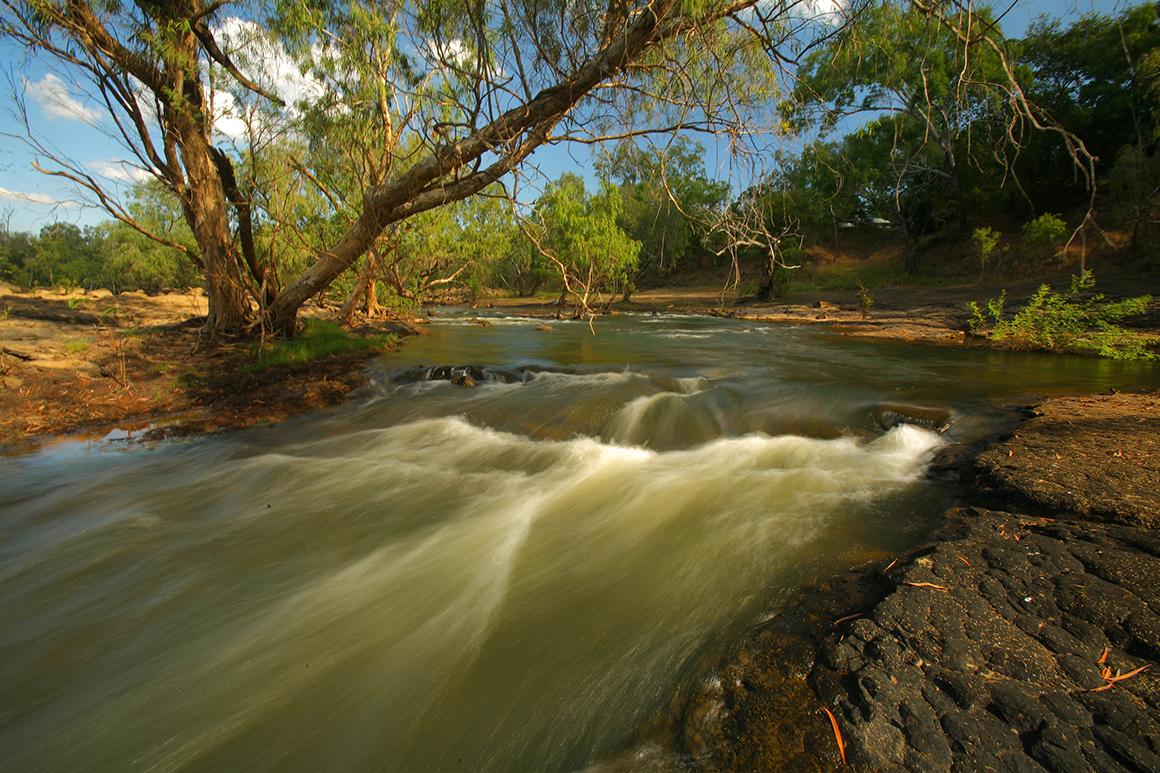 Water cascades around a creek bend beneath a sprawling eucalyptus tree.