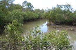 Bushland Beach, Bohle River Fish Habitat Area