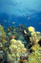 Coral reef. Photo: GBRMPA