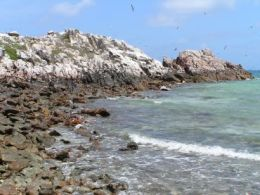 Image of seabirds in flight above the guano stained rocks of Mitirinchi Island.
