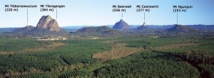 A view of some of the Glass House Mountains from the fire tower platform on Wild Horse Mountain (123m) in Beerburrum East State Forest. Photo: Queensland Government.