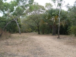 Camp site two at Melaleuca Waterhole camping area. Photo: Queensland Government.
