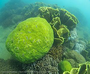 Reef, Eli Creek, Point Vernon West. © Amanda Delaforce.