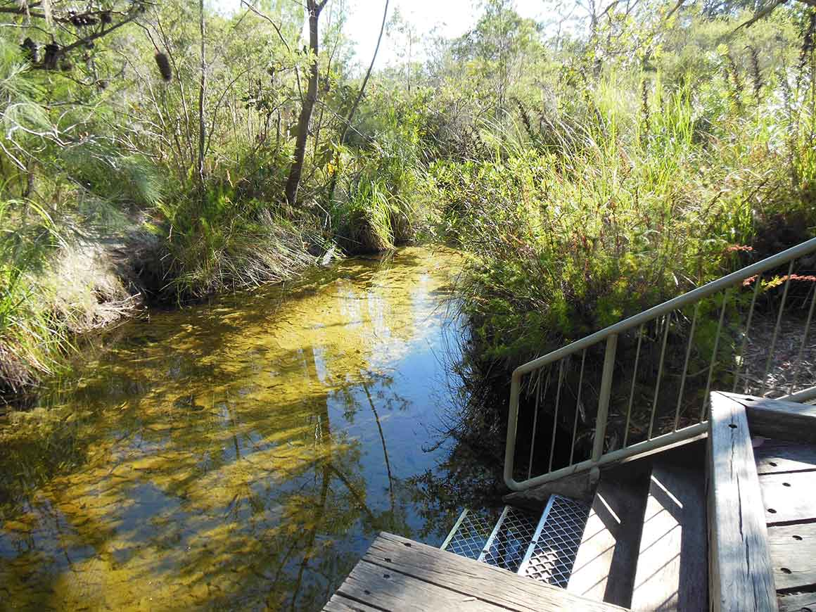 Steps with a handraillead sown to a shallow clear-water creek surrounded by bush