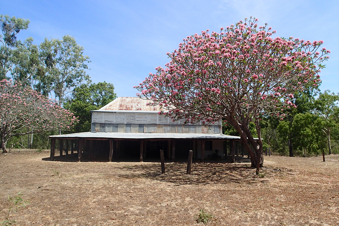 Historic homestead with wide verandas built from corrugated iron and ironwood posts is framed by flowering trees.