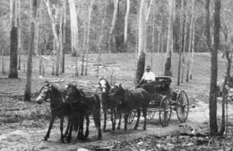 Les Hampson travels through Cania Gorge while returning from Coolangatta to his property Nestorvale in 1926. Photo: courtesy Beryl Bleys.
