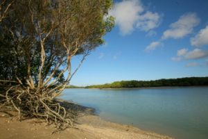 Cape Palmerston National Park features extensive tidal estuaries. Photo courtesy of John Augusteyn.