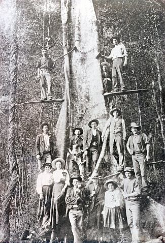 Springbrook was originally referred to as Numinbah Plateau but was also known amongst timber getters as the Land of the Tall Timber. Photo: Gold Coast Image Library—circa 1906.