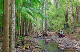 Enjoy the cool shade of Buaraba Creek. Photo courtesy of Brett Roberts.