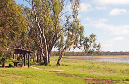 Lake Broadwater is a great spot for a picnic. Photo: Karen Smith © Queensland Government
