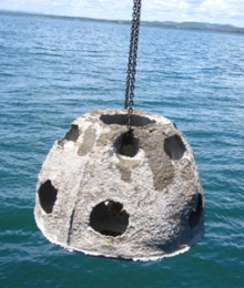 Reef balls were deployed at West Peel Artificial Reef.
