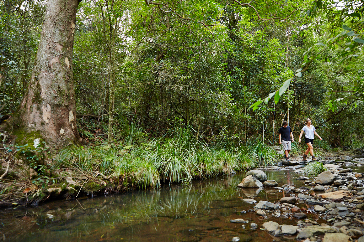 Two walkers step across clear still creek on stones against backdrop of green foliage and large brush box trunk.