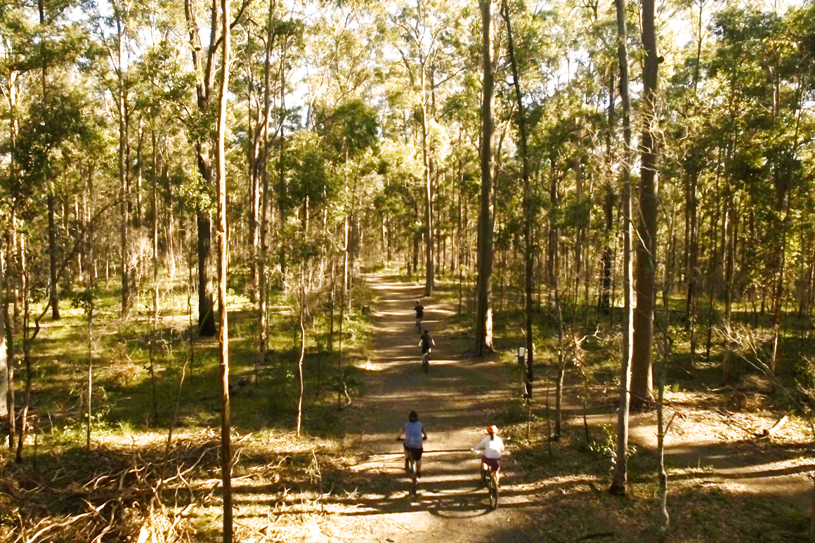 A group of four mountain bikers are travelling along a wide, designated track surrounded by tall eucalypt forest.