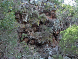 Dry ridge top vegetation is very different to that inside gorges or along the river. Photo: Michael O'Connor, Queensland Government