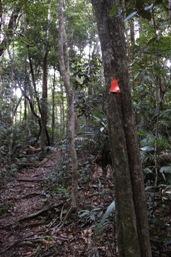 Speewah trail head provides access to the long-distance walks through Barron Gorge National Park.