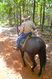 Trail riding through the forest. Photo: Qld Govt.