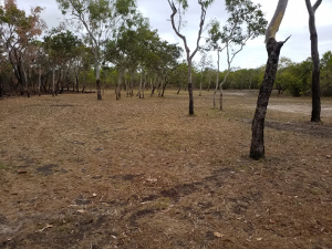 Camping area 2. Photo © Queensland Government