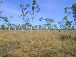 The Savanna country. Photo: Eric Wason, Queensland Government.