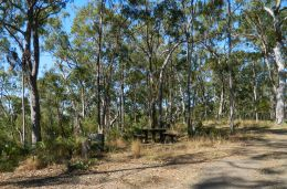 Zamia camping area. Photo Lisa Emmert, Queensland Government.